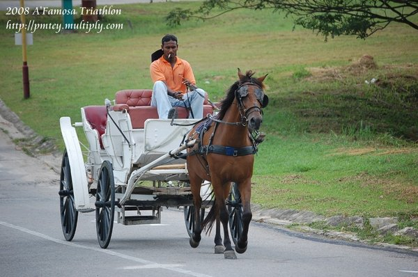 The horse carriage race?!