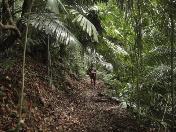 Dream Trail, FRIM, Kepong