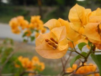 Bunga kertas (literal translation : paper flower)