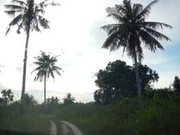 Rover track leading to paddy harvesters housing area