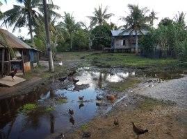 Reflection... Nenasi, Pahang